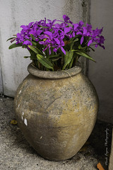 XPro2-2019-0463 (Mark*f) Tags: worthavenue archway bench bougainvilleavines courtyards figs fountain orchids succulents views window
