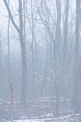 2019 Snow Trees-46 (Michael L Coyer) Tags: snow snowstorm forest woods tree haze winter