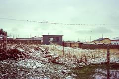 Snow & Birds (hiphopmilk) Tags: copyright©jaredyehwooehmoehfilms konica offroad 現場監督 zoom 35mm 135film film analog analogue jaredyeh hiphopmilk kodak travel china sichuan aba hongyuan qiongxi qiongxizhen tibetan longrang snow birds bird yard field grass sky house