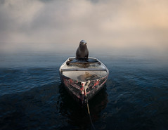 Let's Go Fishing! (ShutterJack) Tags: adventure anchor boat clouds eager fish fishing fog harbor lifeboat lowkey moody moor morning ocean old pinniped quiet roomforcopy rope sea sealion seal skip tattered tether waiting water waves weathered