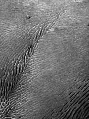 Fungi (JRW Photo Gallery) Tags: mushrooms fungi blackandwhite pattern lines nature abstract
