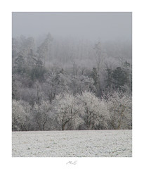 Frozen World (Max Angelsburger) Tags: winter landscape hoarfrost winterlandschaft winterwunderland pine tree kiefern kiefer raureif reif icy eis weis kaltcold white stille nachdenklichkeit thoughtfulness silence dezember december 2018 wurmberg enzkreis canon igworldglobalilovenatureigdivineshotsearthofficialearthshotzmarvelshotstheworldshotzdiscoverglobelandscapeloverlandscapehunter