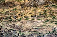 Peru, Colca canyon : Landscape #6 (foto_morgana) Tags: analogphotography analogefotografie aurorahdr2019 colcacanyon fujiprovia100f landscape lightroom mountainous nikoncoolscan outdoor panoramic peru photographieanalogue scenic southamerica terracedfields tourism travelexperience vuescan