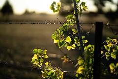 A different shade of green (ThyNameIsBlair) Tags: australia outback bendigo farmlife オーストラリア アウトバック ベンディゴ 牧場ライフ