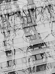 City Jungle (double exposure) (JamieDieu) Tags: 35mmfilm blackandwhite ilford dslrscan om2