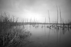 Endzeit (Tofubratwurst) Tags: tofubratwurst tristesse bw sw schwarzweis blackwhite sonyalpha7rm2 spiegelung reflection longexposure langzeit lostplaces