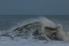 IMG_0674 (monika.carrie) Tags: monikacarrie wildlife scotland aberdeen waves