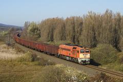 Üres répavonat a Bácsságra (thomasthomasth) Tags: m62 sergej szergej freight sugar suger beet 116 land landscape