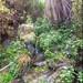La Gomera 2018 - Wasserfall El Chorro