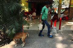 Hiding, Kolkata (dr.subhadeep mondal's photography) Tags: streetphotography street subhadeepmondalphotography urban life people public canon color animal layers calcutta kolkata india indianstreet