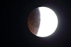 Total eclipse of the moon - Totale maansverduistering 21 th january 2019 (wrblokzijl) Tags: supermaan supermoon superbloedmaan superbloodmoon bloedmaan bloodmoon partical total eclipse moon totaleclipse maansverduistering maan telescoop aardschaduw penumbra umbra telescope luna eclipselunaire lunaire eclipselunar mondfinsternis måneformørkelse måneformørking partialeclipse eclissilunare lunareclipse