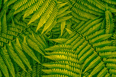 Fern Leaves - Colour- (JayDeWinne) Tags: green fern leaves patterns colours leaf nature flora plant forest nopeople backgrounds botany beautyinnature vector abstract lushfoliage branchplantpart frond closeup freshness depth selectivefocus naturalpattern