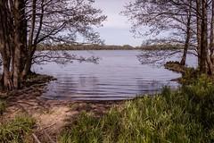 Am See (Doblinus) Tags: schleswigholstein sankelmarkersee wasser water sea deutschland germany trees grass gras