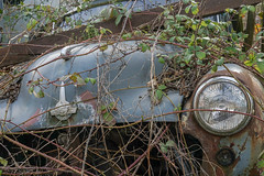 driven to death (SCRIBE photography) Tags: uk england dorset scrap scrapyard junk junkyard decay rust entropy lost abandoned forgotten morris minor vehicle plants weeds retro