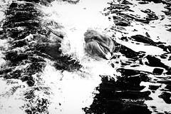    weightless.evg    (_Jimmy_B) Tags: weightless dolphin delfin wasser everglades florida usa tiere animal blackwhite blackandwhite bw schwarzweis schwerelos travel water nikon nikonfx niksoftware silverefex fullframe