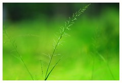 Art    /    happy new year to you all friends (Rajavelu1) Tags: art creative lovely green grass nature closeup availablelight outdoorphotography dslr blurredbackground bokeh cinematic