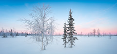 Winter snowy tundra panorama (czdistagon.com) Tags: winter snow landscape frozen fir beautiful frost new year dawn white season forest hoarfrost sun cold nature outdoor hoar spruce wood background snowy snowfall holiday vacation hill wonderland travel ice cloud panorama scene cover nobody panoramic view powder shadow scenic trip weather silence natural breathtaking tourism russia