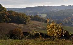 marqueur d'automne (jean-marc losey) Tags: france aquitaine lotetgaronne beauville randonnée automne autumn arbre d700