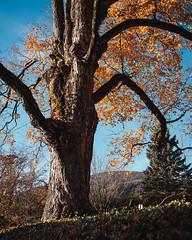 DSCF8960FullRes (djandzoya) Tags: boone boonenc hiking vacation fall fallcolors