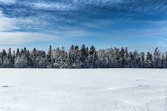 Plain winter landscape (AlKulon) Tags: balanced blue clouds copyspace field forest landscape plain snow snowfield straight trees white winter белый зима лес облака пейзаж поле синий снег