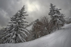 Furano (south*swell) Tags: furano hokkaido japan snow mountain tree trees landscape scenery