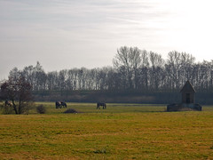 Frysian landscape near Uitwellingerga ... (N3687) (Le Photiste) Tags: clay frysianlandscapenearuitwellingerga frysianlandscapewithhorsesnearuitwellingergafryslânthenetherlands fryslânthenetherlands fryslânheitelân frysianlandscape nederland ngc nature naturesprime rainbowofnaturelevel1red planetearthnature planetearth horses animals meadow nikon nikoncoolpixs9900 perfectview perfect beautiful mostrelevant mostinteresting afeastformyeyes aphotographersview autofocus artisticimpressions blinkagain beautifulcapture bestpeople'schoice creativeimpuls cazadoresdeimágenes digifotopro damncoolphotographers digitalcreations django'smaster friendsforever finegold fairplay greatphotographers groupecharlie peacetookovermyheart clapclap hairygitselite ineffable infinitexposure iqimagequality interesting inmyeyes livingwithmultiplesclerosisms lovelyflickr myfriendspictures mastersofcreativephotography niceasitgets momentsinyourlife photographers prophoto photographicworld photomix soe simplysuperb showcaseimages simplythebest simplybecause thebestshot theredgroup thelooklevel1red vividstriking wow yourbestoftoday landscape great greatview frysianmeadow peacefullandscape