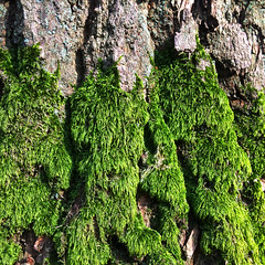 tree detail (Jos Mecklenfeld) Tags: tree boom forest bos moss mos nature natuur