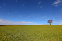 one tree (Xtraphoto) Tags: baum tree one einer alone lonely sky landscape landschaft field