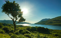 Irland, Killary Fjord bei Leenaun (FV1405) Tags: 2018 connemara gegenlicht irland