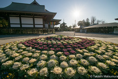 Narita-san Shinsho-ji Temple (takashi_matsumura) Tags: naritasan shinshoji temple narita chiba japan ngc nikon d5300 flowers flora 成田山 新勝寺 afp dx nikkor 1020mm f4556g vr