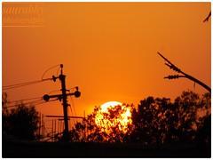 Almost bloody sunset (saurabhsarthak) Tags: nikoncoolpixl340 nikon sunset sun tree silhoutte pointandshoot justshoot dawn amateur zoomin photography nature naturalbeauty