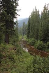 Pioneer Mountains (TexasExplorer98) Tags: pioneermountains pioneermountainscenicbyway hiking forest nationalforest montana