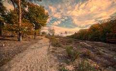 Painterly landscape. (Alex-de-Haas) Tags: 11mm adobe adobelightroom aurorahdr aurorahdr2019 blackstone d850 dutch europa europe european hdr holland irix irix11mm irixblackstone lightroom limburg molenhoek mook mookerheide nederland nederlands netherlands nikon nikond850 skylum autumn beautiful beauty bomen boom bos cirrus cloud clouds colorful colourful fall forest heide herfst landscape landschaft landschap mooi nature natuur park pretty schoonheid sky skyscape sundown sunset tree trees warm wolk wolken woods zonsondergang
