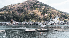 DSC01320 (Neo 's snapshots of life) Tags: japan 日本 京都 kyoto amanohashidate 天橋立 あまのはしだて sony a73 a7m3 24105 伊根