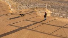 Long Shadows (Mandy Willard) Tags: diagonals 119in2019 shadows prom beach dog man