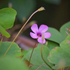 #flowers #flores #nature #naturaleza #nikon (Odizlo) Tags: flowers flores naturaleza nature