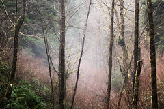Gandalf's Approach (kephart_kyle) Tags: 2019 foggy coast foliage forest january mist morning northwest oregon pacific pnw rainforest sunrise trees waterfall winter
