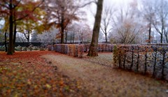 Icy Morning (farmspeedracer) Tags: nature autumn fall november 2016 fog mist cold park foliage tree brown freeze