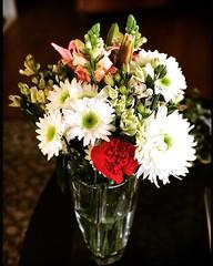 The whole bunch. #Takoma #dc #dclife #washingtondc #iphone #iPhonemacro #macro  #flower #flowersofinstagram (Kindle Girl) Tags: iphone takoma dc dclife washingtondc iphonemacro macro flower flowersofinstagram