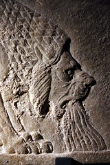 Dying Lion (calmeilles) Tags: london england unitedkingdom ashurbanipal britishmuseum assyria ancienthistory archaeology middleeast nineveh