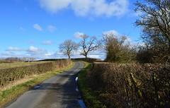 Country Lane, Ayrshire, Scotland. (Phineas Redux) Tags: countrylaneayrshirescotland scottishlandscapes scottishscenery scottishlanes scottishcountryside scotland ayrshirescotland