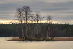 Dreaming eyot (Rico the noob) Tags: dof 300mm d850 landscape sunset finland water outdoor lake clouds trees tree travel forest 300mmf4pf sky published 2018 longexposure nature
