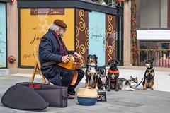 D1001222 (sswee38823) Tags: dog dogs audience donald hurdygurdy hurdygurdyman hurdy gurdy busker streetmusician streetportrait street pet newburyst boston bostonma city newengland m10 m10leica leicam10 leicacameraagleicam10 leicanoctiluxm50mmf095asph noctiluxm50mmf095asph noctiluxm109550mmasph noctilux095 noctilux noc noctiluxm109550asph 095 f95 leica50mmf95 50mm 50 nofilter photography photograph photo seansweeney seansweeneyphotographer
