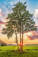 Sonnenuntergang (w.lichtmagie) Tags: hdr vilsheim baum sonnenuntergang sonne gegenlicht bearbeitet orton photoshop canonefs1585 ngc