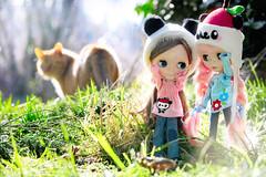 apple panda girls🍎  *part 2* (sugarelf) Tags: urbancowgirl blythe doll daintybiscuit hammy familycat tigerkitty mycat pacificnorthwest nature photography pandapple sanriocharacter handmadedollclothes