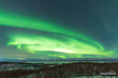 Green Cyclone (kevin-palmer) Tags: abisko sweden swedishlapland arctic march winter clear night sky stars starry space astronomy astrophotography aurora auroraborealis northernlights green cold snow snowy torneträsk birchtrees forest bright nikond750 sigma14mmf18 europe moonlight moonlit