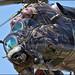 Mil Mi-24V Alien Tiger