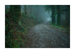 Lost Gwydhyel  4 (Barry Haines) Tags: cardinham woods cornwall woodland sony a7r2 a7rii 50mm speedmaster mitakon f095 mist fog early evening lost track trees