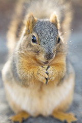 Knowing she had her cute looks on her side, Baddy Bad proceeded to climb my leg and steal my lunch before I could run away. (HellaDamnSquirrels) Tags: squirrels rodent oakland lake merritt hella damn