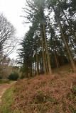 Durford Wood (PLawston) Tags: uk great britain england west sussex border path south downs park national durford wood pine trees